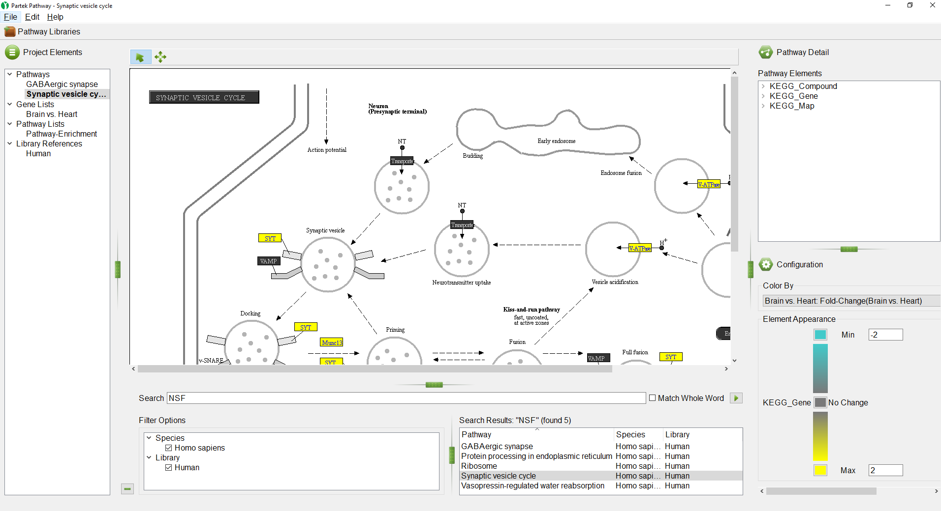 Analyzing pathway enrichment in Partek Pathway - Genomics